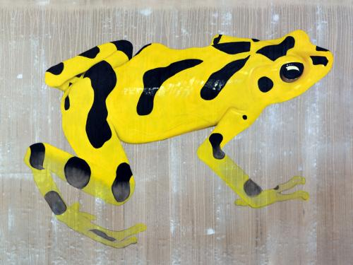 panamanian golden frog threatened endangered extinction atelopus Thierry Bisch Contemporary painter animals painting art decoration nature biodiversity conservation