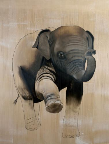 elephant asiatic indian baby elephas maximus delete threatened endangered extinction