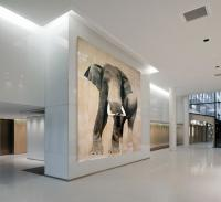 ELEPHAS-MAXIMUS elephant-Asian-elephas-maximus Thierry Bisch Contemporary painter animals painting art  nature biodiversity conservation